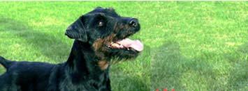 Hodowla psów myśliwskich